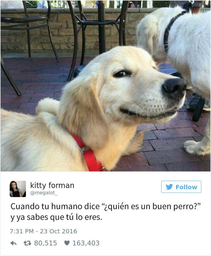 tuits-perros-3