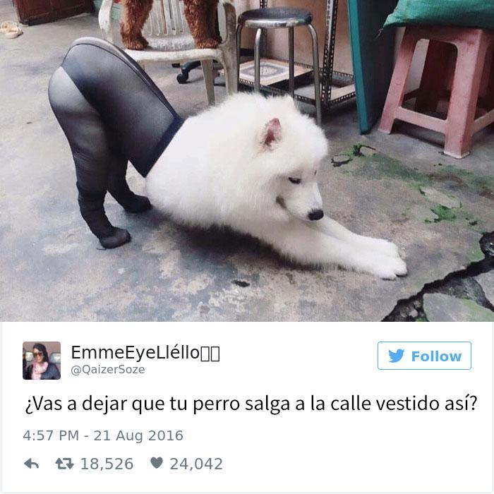 tuits-perros-9
