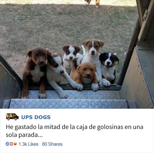 perros-ups-11