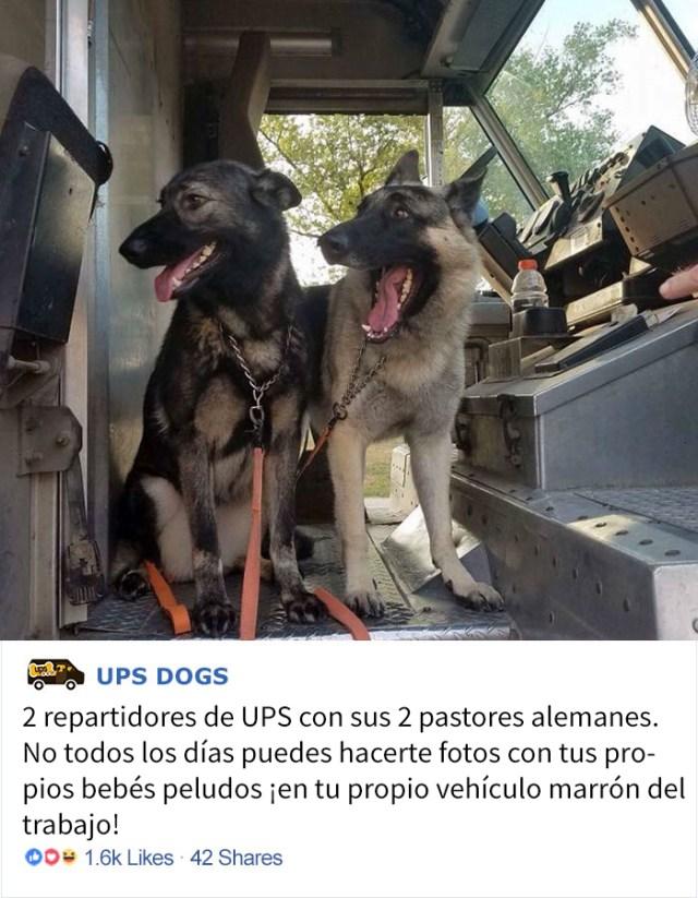 perros-ups-3