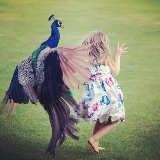 Esta Chica Estaba Persiguiendo Y Molestando Al Pavo Real En El Parque. En Cuanto Se Dio La Vuelta, Él Se Vengó