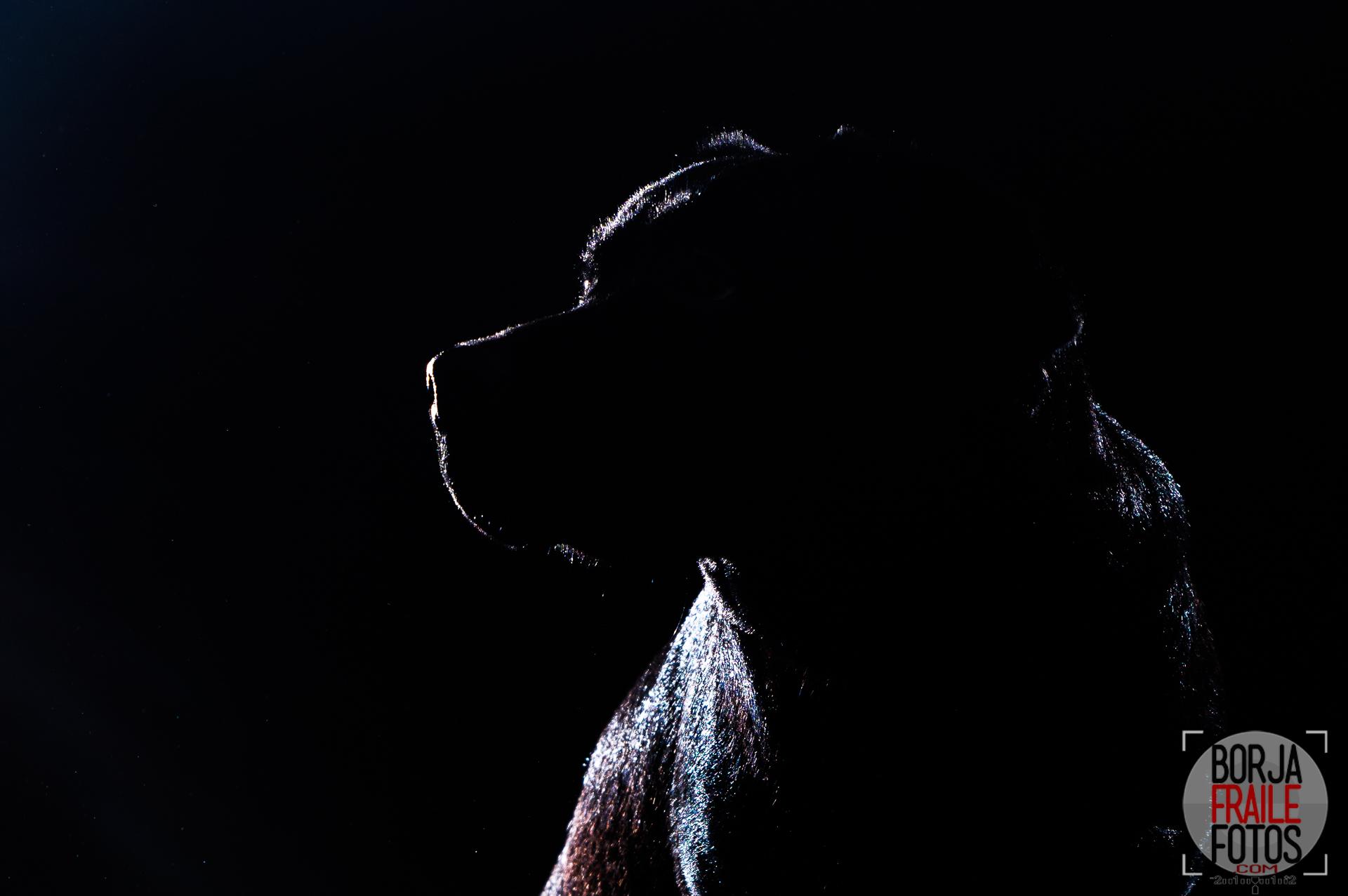 20210102panceta304 - Panceta, perra modelo... fotos de perros.