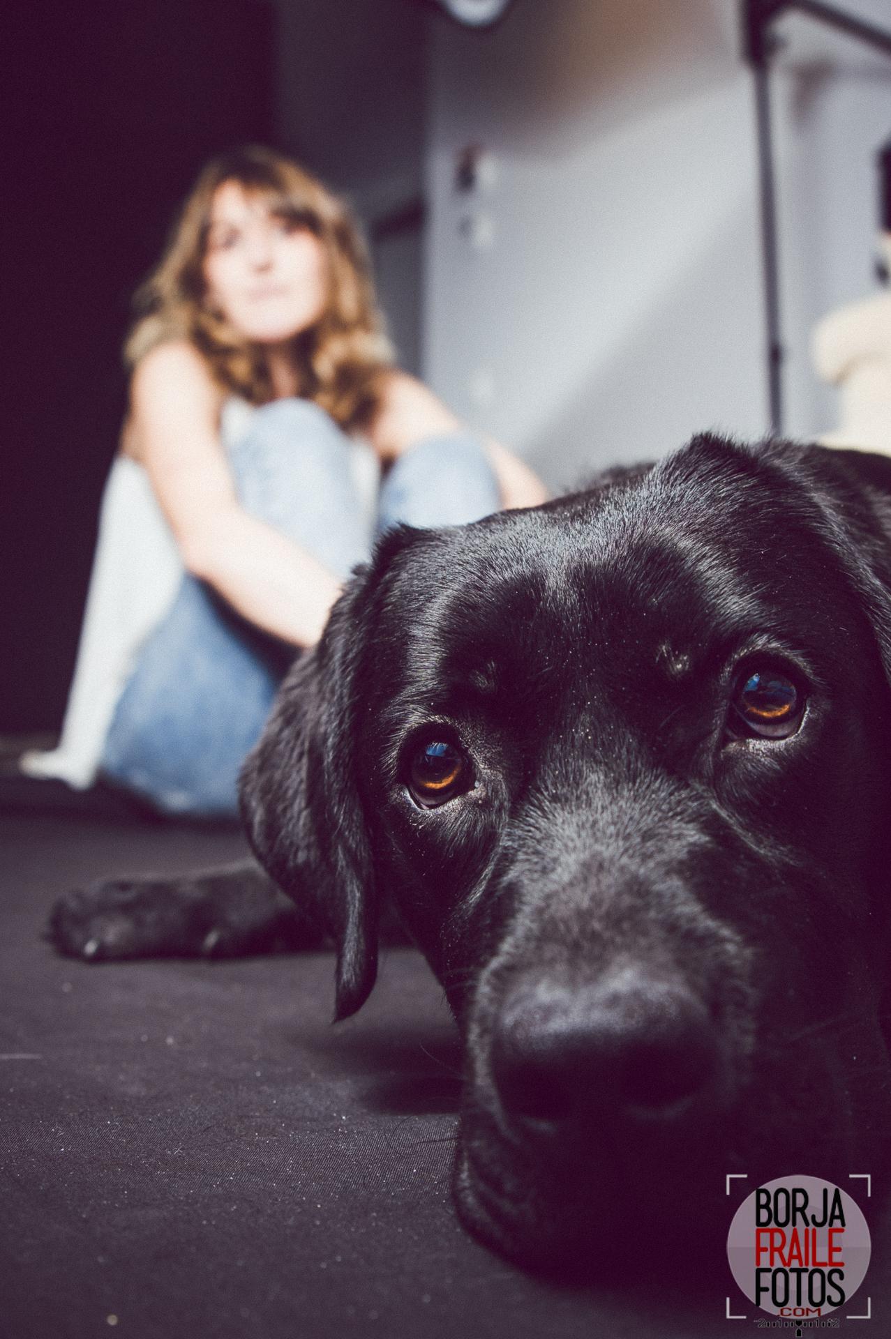 20210102panceta395 - Panceta, perra modelo... fotos de perros.