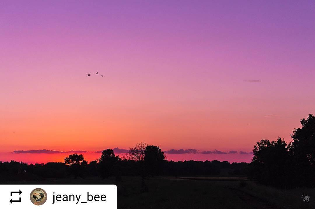 "#Repost @jeany_bee ""Nature always wears the colours of the spirit."" ~ Ralph Waldo Emerson ~  #sunset #rondjelimburg #prachtiglimburg #visitzuidlimburg #naturephotography #nature_perfection #naturelovers #mothernature  #sunrise_and_sunsets #insta_sky_lovers #ig_sunrisesunset #limburgslandschap #limburgsmooiste #cameranu_nl #fifty_shades_of_nature #nature_adict #natuurfotografie #picturetokeep_nature #nature_fantastically #moody_nature #pocket_allnature #unsquares #fotocatchers"