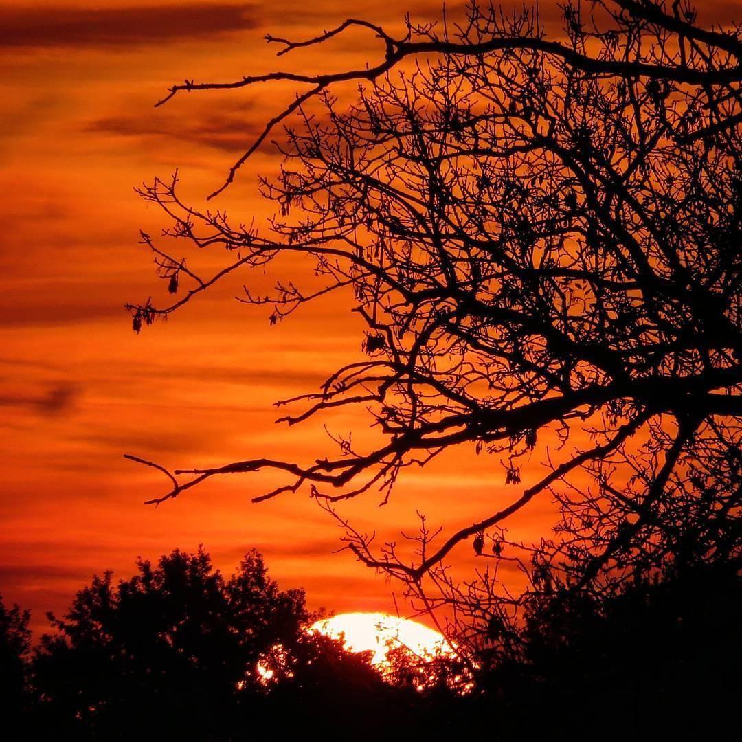 #Repost @leike_peters #sunrise #thismorning @limbrichterbos #limburgsmooiste #limburg #liefdevoorlimburg #ditislimburg #born #borninbeeld