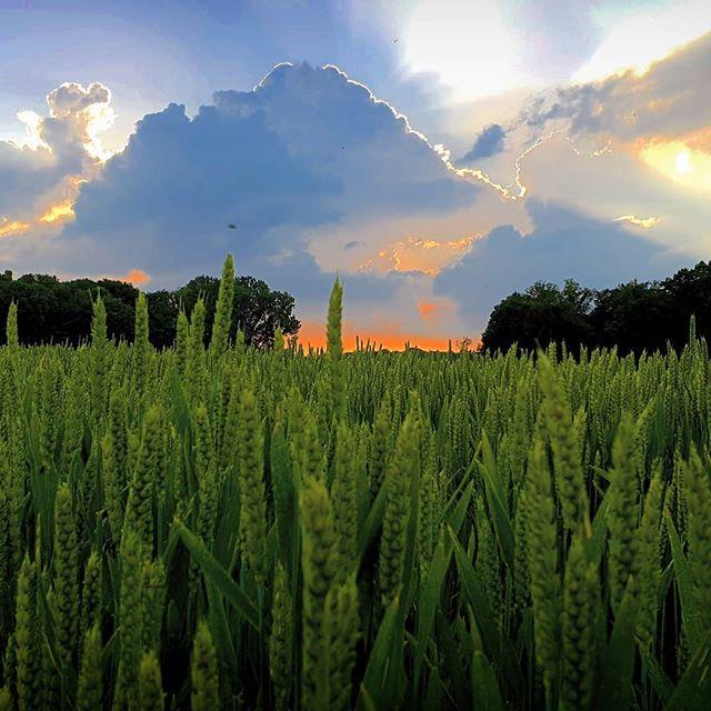 Fraaie kleuren vanavond… #born #borninbeeld #limburg #derollen #zonsondergang #sunset