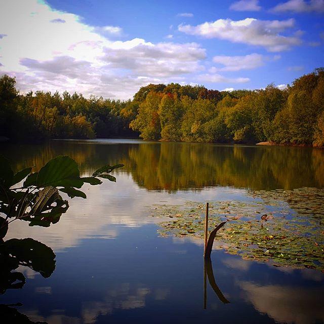Herfst…? Het leek wel even voorjaar vandaag in #Born …#limbrichterbos #derollen #liefdevoorlimburg