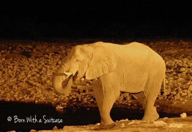 Elephant at Okaukuejo Waterhole