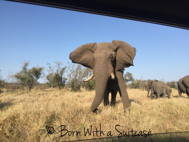 Visiting South Africa: 10 Reasons for Aussies to Head West