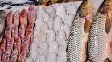نتيجة بحث الصور عن مشروع تجارة الأسماك من المشاريع المربحة 2021