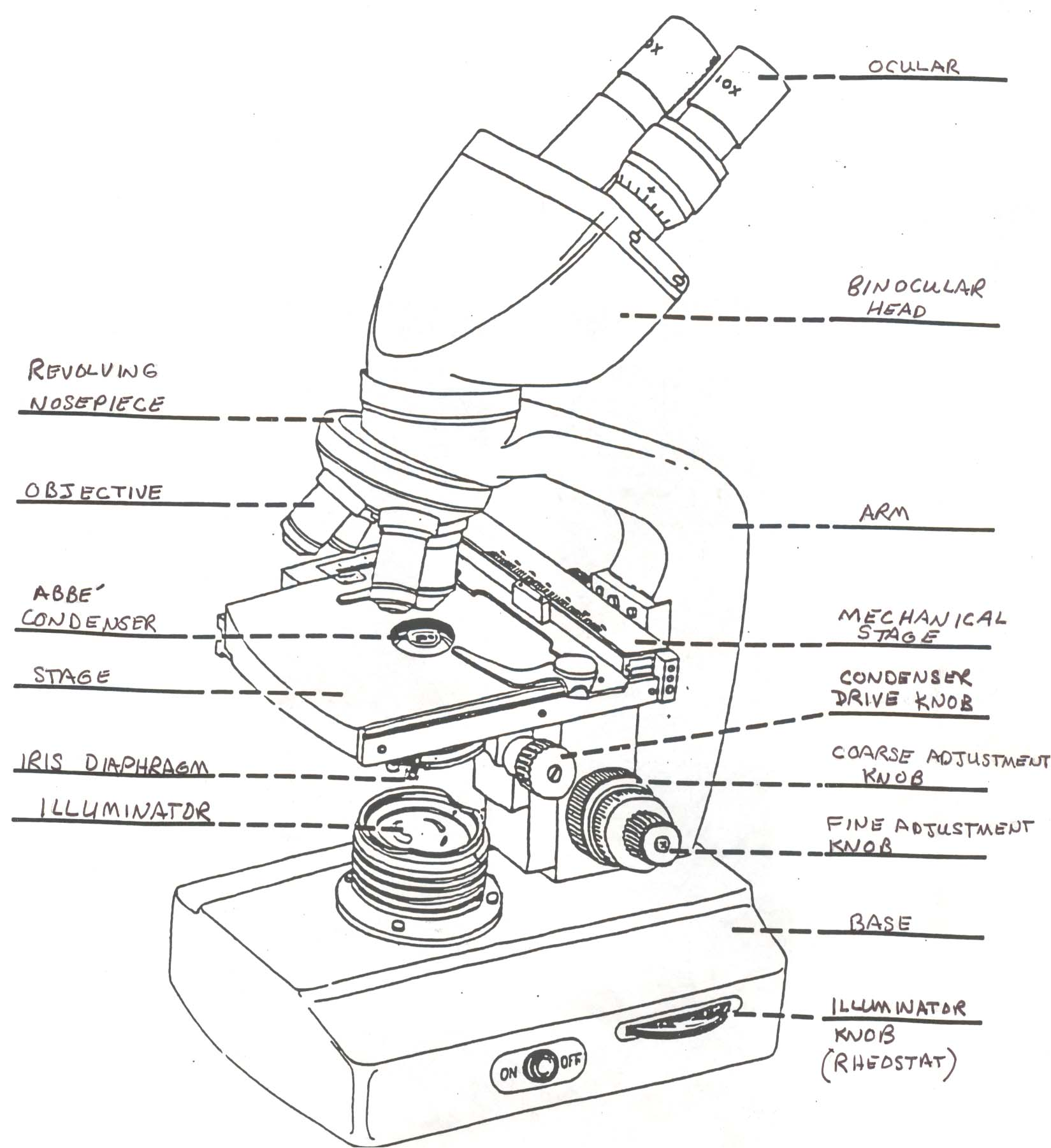 What Sort Of Microscopes Are Used In Schools And Universities