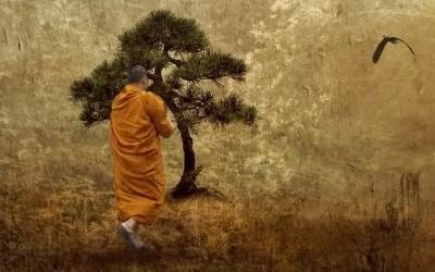S.N.Goenka Vipassana Dhamma Meditasyon Boş Ayna