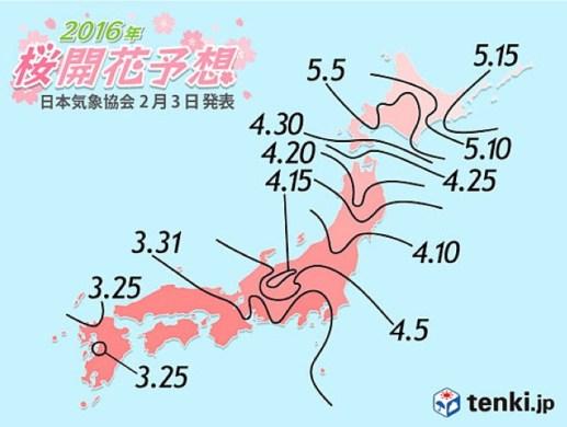 2016 kiraz çiçeği açma başlangıcı tahmin raporu