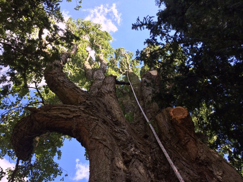 Tree services Bramhall