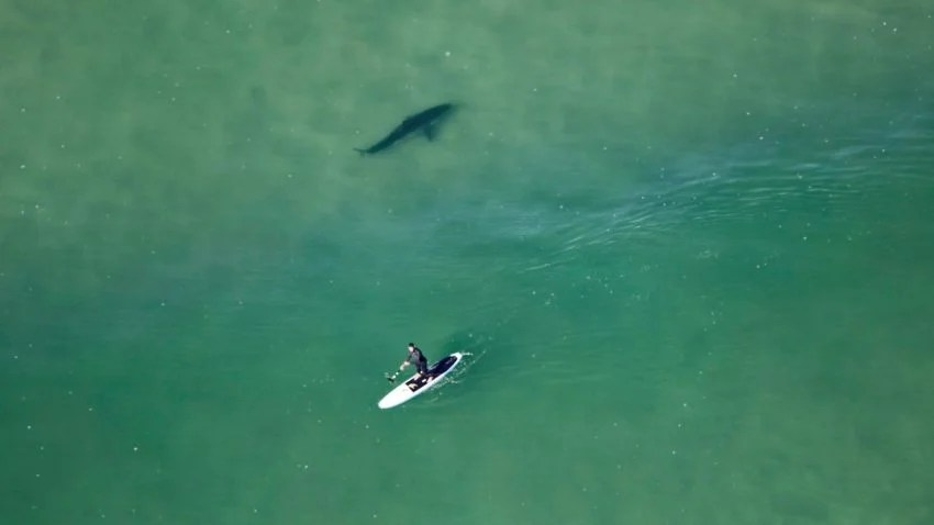 A Nauset Beach Paddle Boarder Got A Little Too Close For
