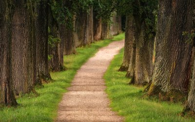 Navigating New Paths In Your Professional Environment