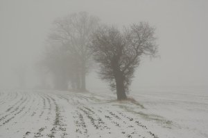 Foggy winter field with trees