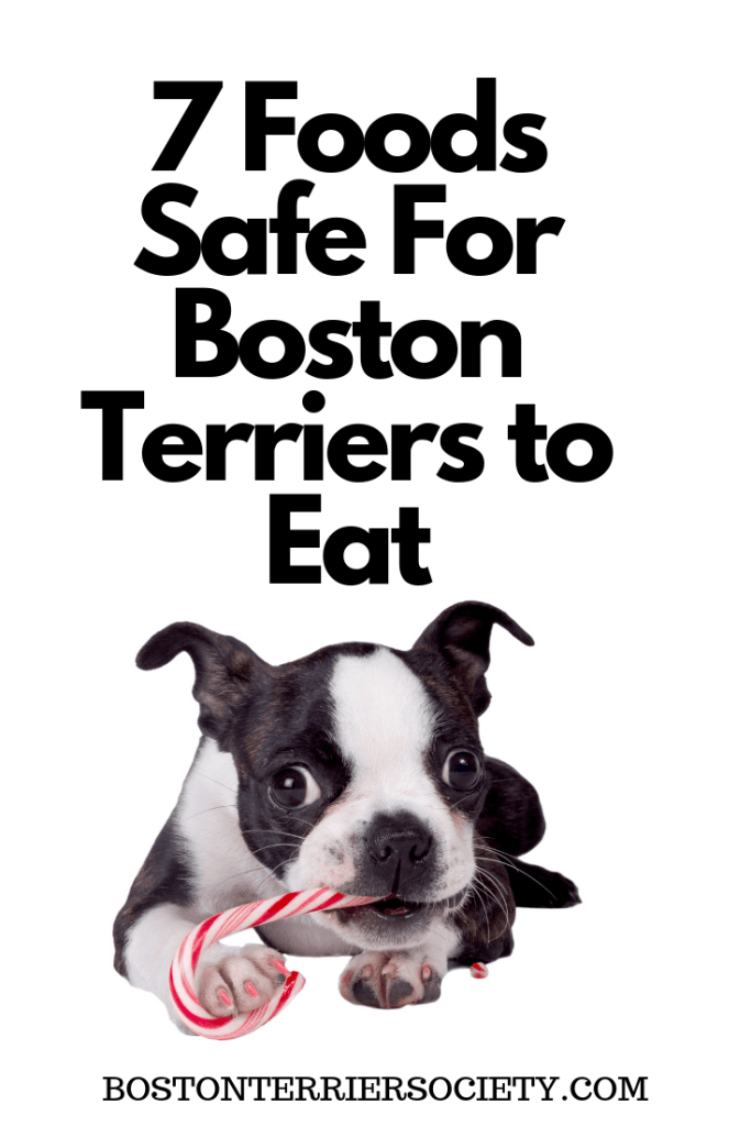 Human Foods Safe for Boston Terriers To Eat. Boston Terrier Society.