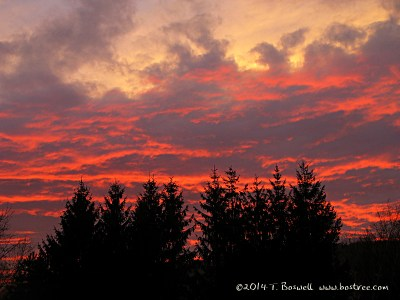 Sunset. Bostree, Sugar Loaf, NY. Photo by Terry Boswell.