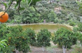 Botanical Park-Gardens of Crete- Citrus Trees by our pond