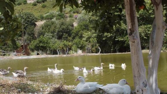 Βοτανικό Πάρκο- Κήποι Κρήτης: Πάπιες στην λίμνη του πάρκου.