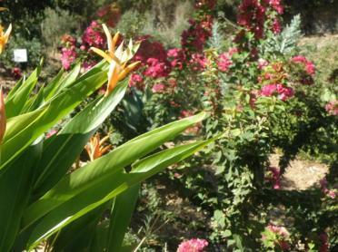 Botanical Park-Gardens of Crete- Flower Blossoms