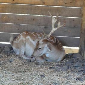 Botanical Park-Gardens of Crete- Our Animal Farm- Deer