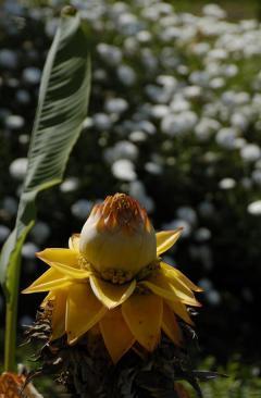 Βοτανικό Πάρκο- Κήποι Κρήτης: Τροπικά Λουλούδια
