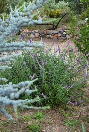 Botanical Park-Gardens of Crete- Aromatic Herbs