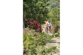 Βοτανικό Πάρκο- Κήποι Κρήτης: Ένας ιδανικός Περίπατος