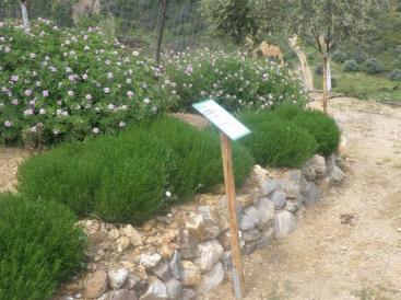 Βοτανικό Πάρκο- Κήποι Κρήτης: Χώρος στο Πάρκο