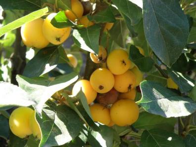 Botanical Park-Gardens of Crete- Tropical Fuits