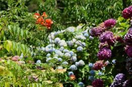Botanical Park and Gardens Of Crete- Blossom Details