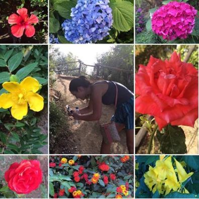 Botanical Park and Gardens Of Crete- Colourful Blossoms of our Gardens
