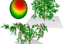 Modelling fruit temperature dynamics in apple