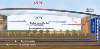 Image: Seawater Greenhouse Ltd