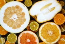 Nuclear and maternal phylogeny in 'true citrus'