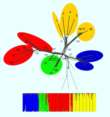 Phylogeography and seed dispersal in islands