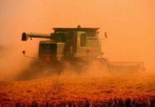 A rust red combine harvester running over rust coloured wheat against an orange sky.