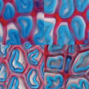 Gibberellin mediates tension wood formation