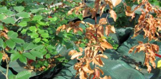 Water stress, xylem hydraulic failure and tree death