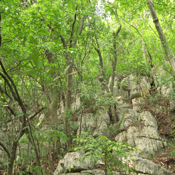 Nutrient stoichiometry and resorption in karst vegetation