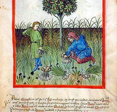 Image: From Tacuinum Sanitatis, ca. 1400.