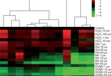 Hierarchical clustering and heat map of ER stress-related genes in leaves treated with H2O2, Rot, MV, DCMU and 3-AT (average linkage and Euclidean distance as similarity measure).