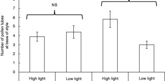 Mean±s.e. number of C. gaumeri pollen tubes at the base of the style in plants exposed to high and low water and light availability treatments.