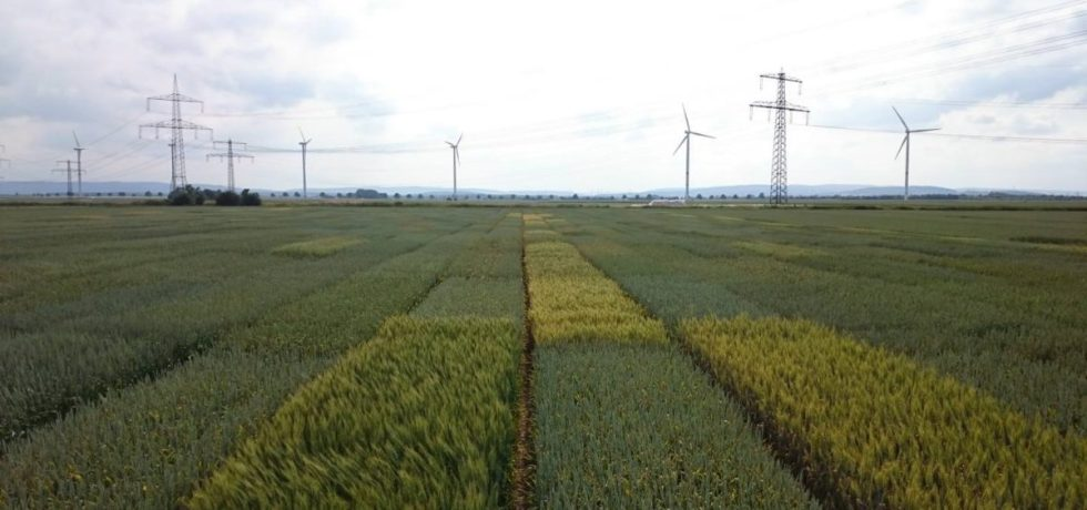 The BRIWECS project on winter wheat.