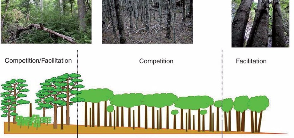 Old-growth forest (OG), second-growth forest interior (SGI) and second-growth forest edge (SGE) of Nothofagus pumilio and their schematic representation in a forest colonization gradient.