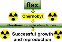 An Updated model for flax growth in radio-contaminated Chernobyl area.