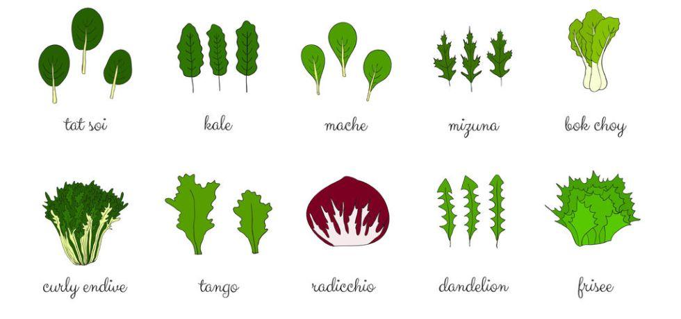 Salad leaves and vegetables.