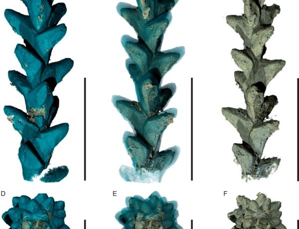 PPC-SRμCT, 3D renderings of the leafy axis of Glenrosa carentonensis, specimen IGR.BUZ-7.
